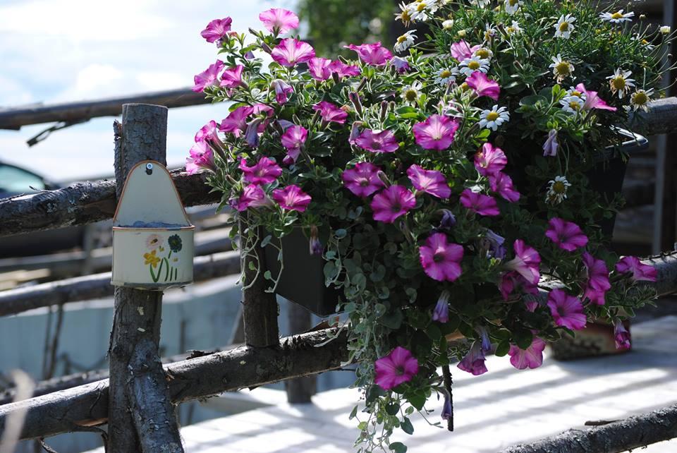 Det blomstrer i Uthuslia
